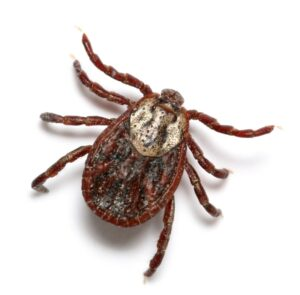 forestry mulching lowers tick populations